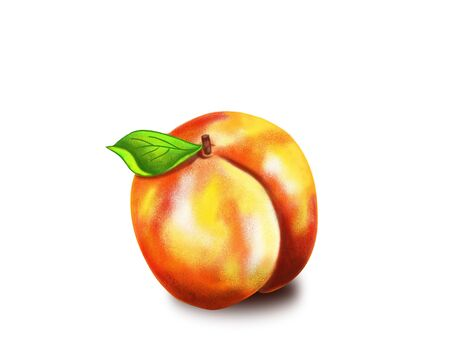 illustration of a peach isolated on white background. Foto de archivo - 131714764