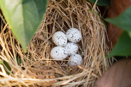 Bird nest with eggs in the beautiful nature. 版權商用圖片