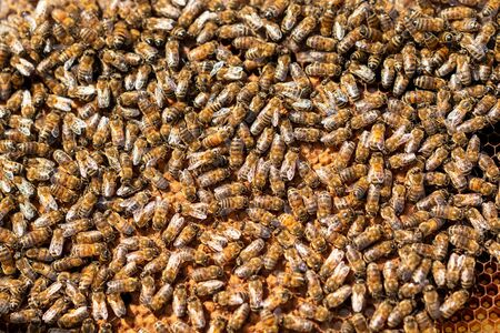 A colony of Bee's are working hard for producing honey on honeycomb. Banco de Imagens - 132125924