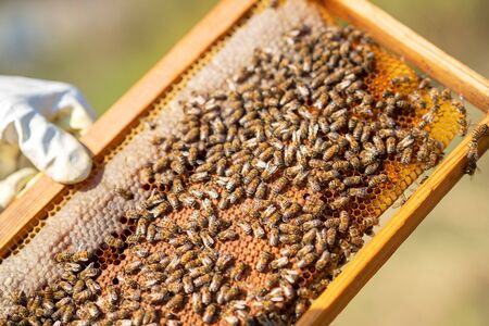 Bees are working hard for producing honey on honeycomb. Banco de Imagens