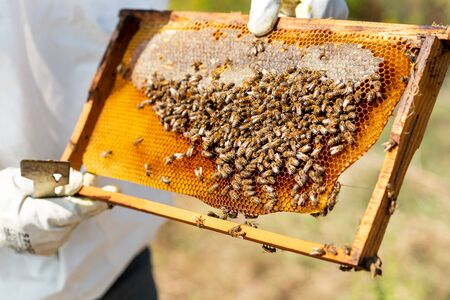 Bee's are working hard for producing honey on honeycomb. Banco de Imagens - 132124255