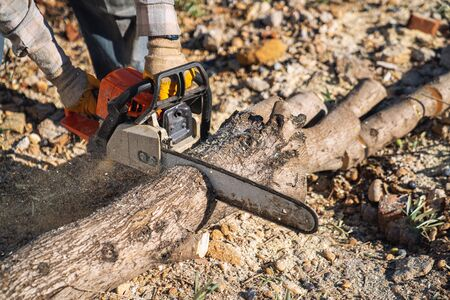 A lumberjack is sawing a tree with a chainsaw. Stock Photo