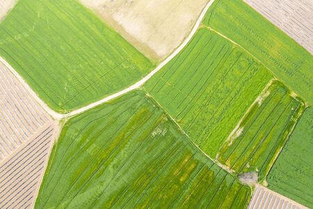 An aerial view of huge agricultural plant fields, divided with path. Green growing plants below Foto de archivo