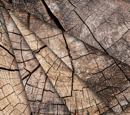 Many Tree stumps background. Mosaic of brown cracked and cut Wooden texture pattern background