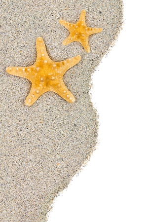 sea star: Beach with sand and starfish isolated on white