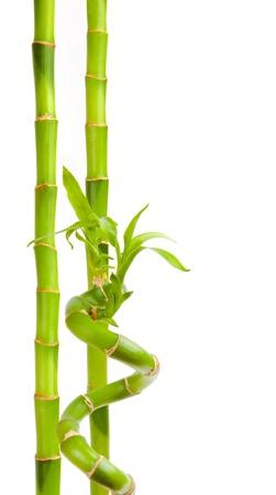 Bamboo isoliert auf weiß Standard-Bild - 15376008