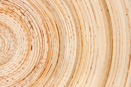 Abstract background like slice of wood timber natural Stock Photo - 15447726