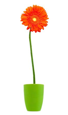 gerber:  Stock Photo: colorful orange daisy gerbera flowers in a vase Stock Photo