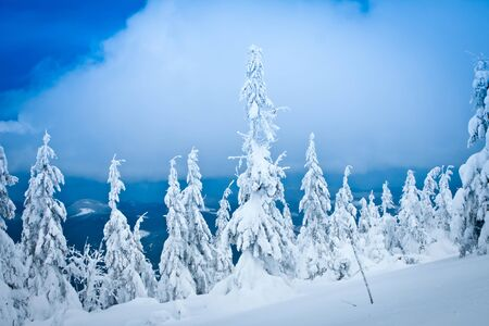 hoar: winter mountains landscape  Stock Photo