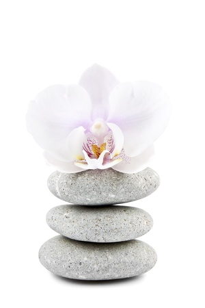 orchid and stones on the white background photo