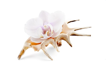 orchid in shell on white