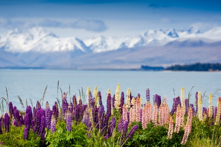 tekapo: Majestic mountain lake with llupins blooming Stock Photo