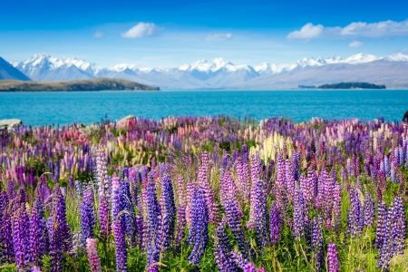 mountain lake with blooming flowers on foreground
