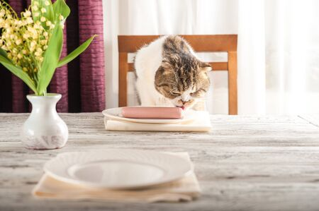 A hungry domestic cat is sitting at a table with boiled sausage. Home cat eat sausage from a plate.