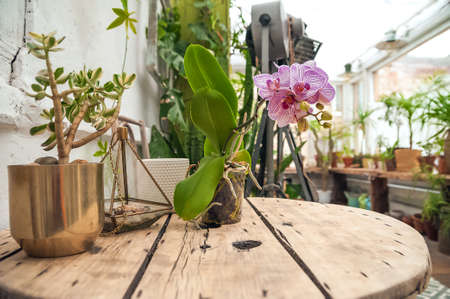 Biophilia Trend Style. Details of a courtyard with potted houseplants. Orchids are blooming.