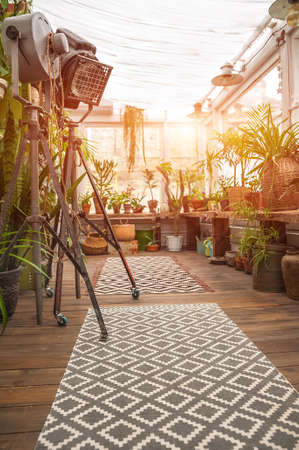 Biophilia Trend Style. Details of a courtyard with potted houseplants.