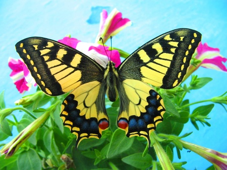 Bright butterfly on a flower photo