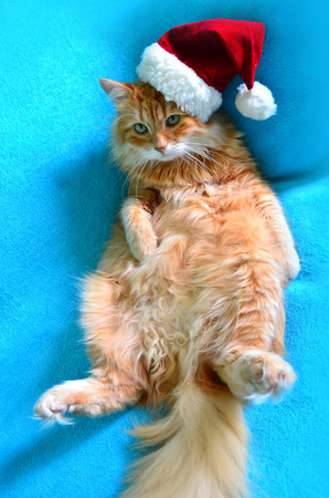 Funny lazy red cat in Santa Claus hat photo