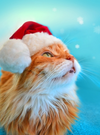 Funny cat in Santa Claus hat looking at the snowflakes