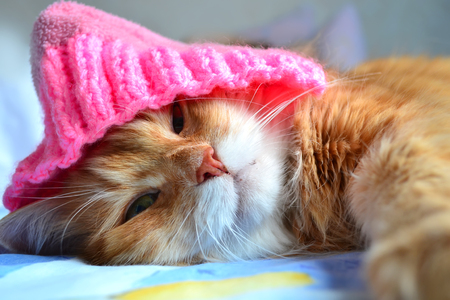 Funny cat in the pink hat