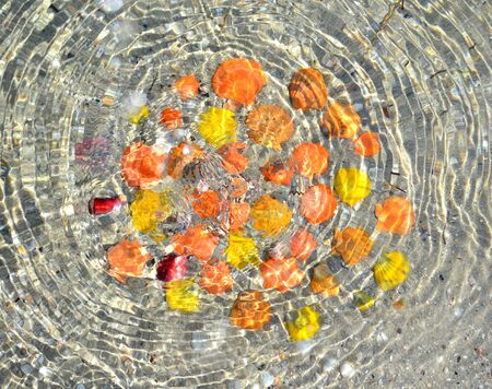 seawater: Multicolored shells in the transparent seawater.