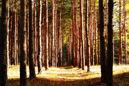 ray trace: Forest track in the beautiful sunlight.