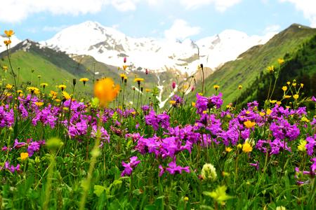 Beautiful flower meadow in Caucasus mountains.  Svaneti, Georgia, Europe.
