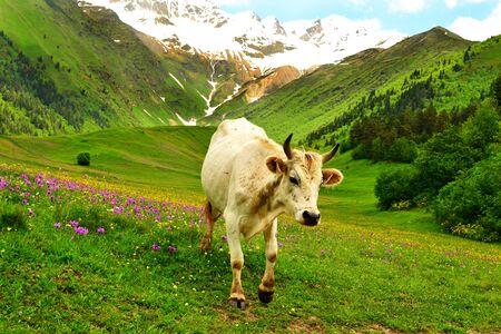 Beautiful landscape in Caucasus mountains.  Svaneti, Georgia, Europe. Stock Photo