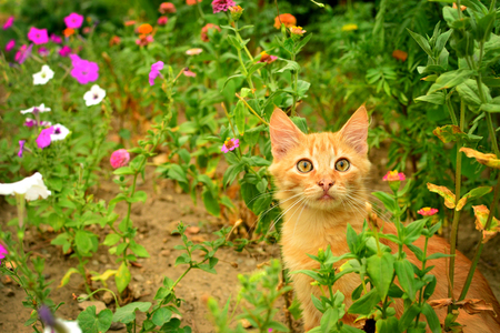 Red kitten in the flowerbed. Stock Photo