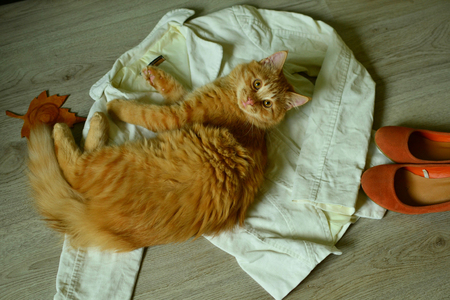 Pretty red cat on the womans cloth. Stock Photo