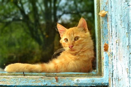 Pretty red cat looking at the window.