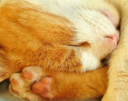 The portrait of a sleeping red cat.