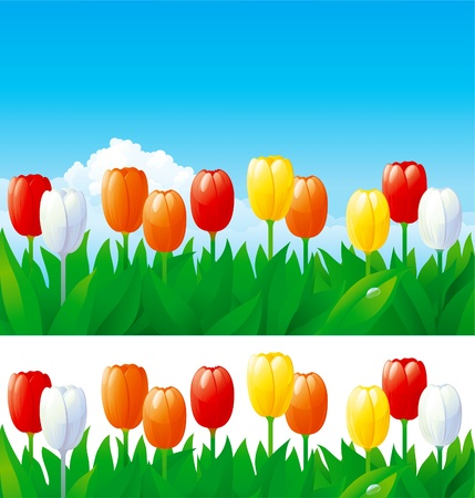 spring background of  many tulips on blue sky and isolated on white. Vector