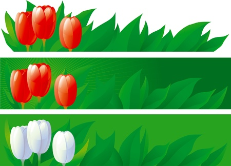 illustration of horizontal borders with tulips  on three backgrounds Vector