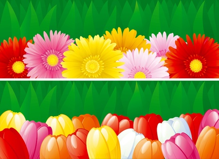 꽃이 만발한: Two vector   backgrounds with  blossoming flowers - tulips, gerberas.