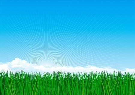 Hierba verde. Vectoriales de fondo de paisaje de primavera de la hierba verde en el cielo azul con nubes y sunbeames.