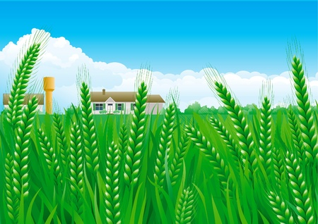 Grain fields . Summer landscape of green Grain fields with house and Water Tower.  Illustration