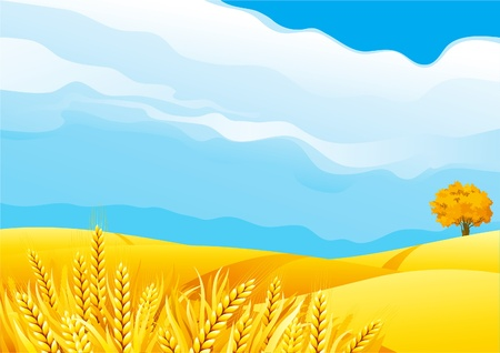 wheat illustration: Grain fields. Fall landscape of yellow Grain fields with Wheat Illustration