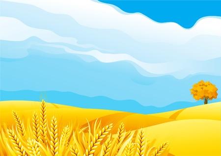 Grain fields. Fall landscape of yellow Grain fields with Wheat Illustration