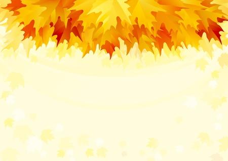 hojas de maple: El oto�o de hojas de arce