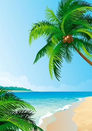 Coconut palm trees.  Vector