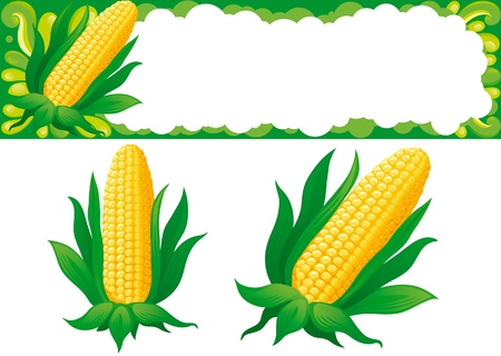 corn crop: Corn. Two isolated corns and web banner for thanksgiving