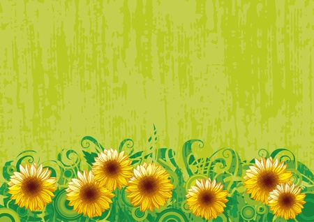 green grunge background: border with Sunflowers on green grunge background Illustration
