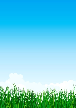 pasturage: Green grass. Vector illustration with  green grass  on background of blue sky