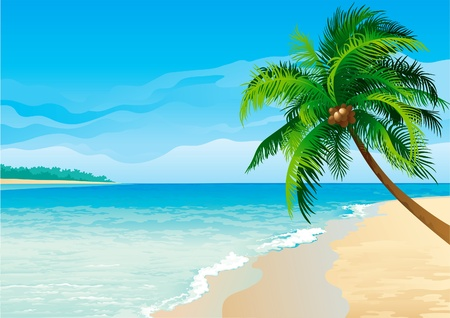 beach scene: Coconut palm tree . Vector illustration  of coconut palm tree on tropical beach - Horizontal format.  Illustration