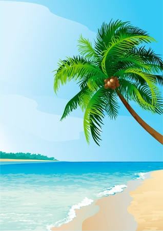 blue lagoon: Coconut palm tree. Vector illustration  of coconut palm tree on tropical beach . Vertical format.