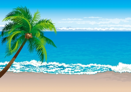 isle: Tropical coast  Vector illustration  of coconut palm tree on a beach - Horizontal format