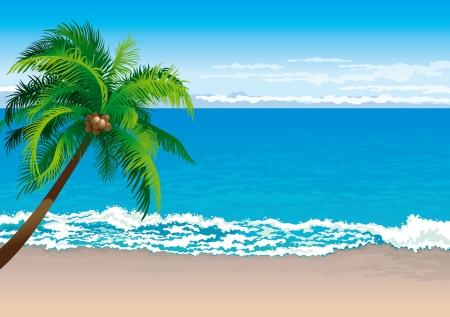 Tropical coast  Vector illustration  of coconut palm tree on a beach - Horizontal format
