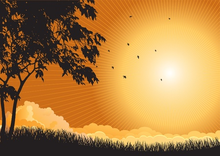non urban scene: Sunrise landscape  Vector  silhouette  of  maple trees  and flying birds at sky with sun and sunbeam