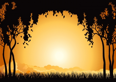 non urban scene: Sunset  landscape  Vector  silhouette  of  many  trees  and grass at sky with sun and sunbeam